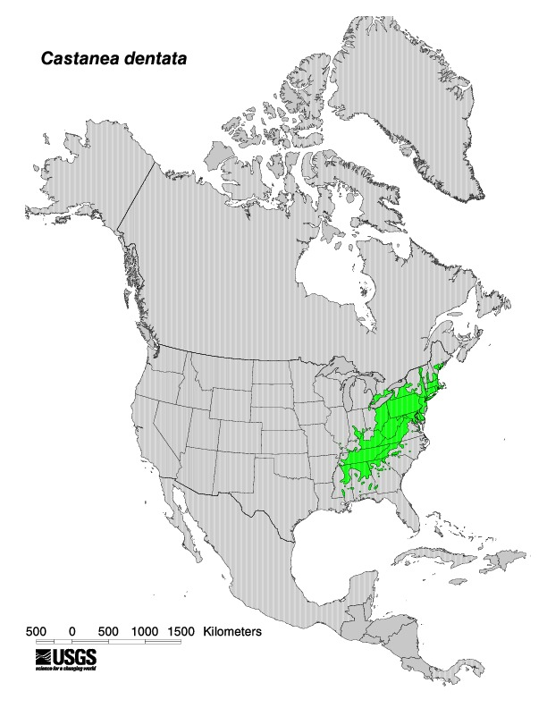 Historical Range of the American Chestnut Tree