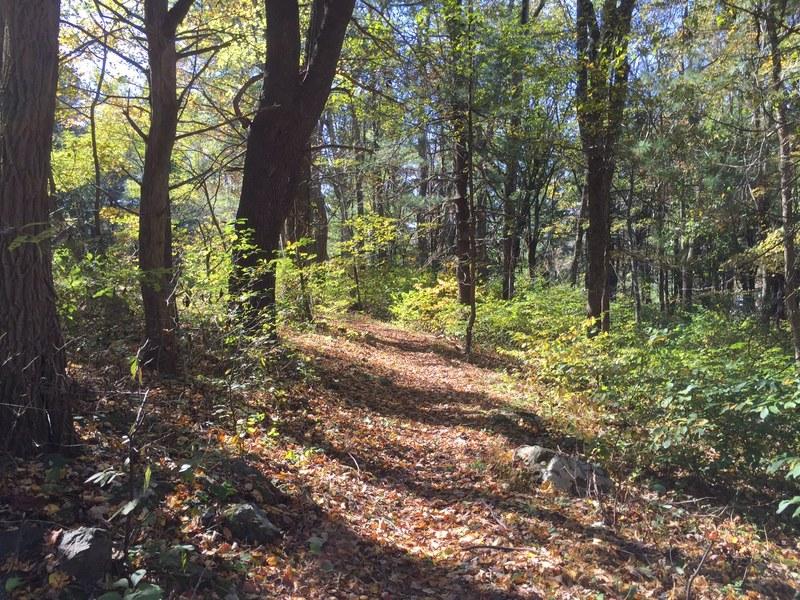 Appalachian Trail in Shenandoah National Park