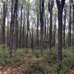 Shenandoah National Park Trees.JPG