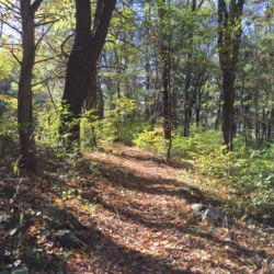 Appalachian Trail in Shenandoah National Park3.JPG