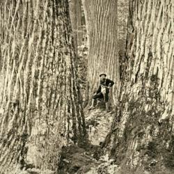 chestnut-vintage.jpg